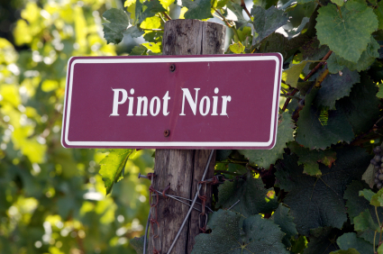Excellent Pinot Noir for Summer